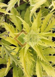Rośliny liściaste
